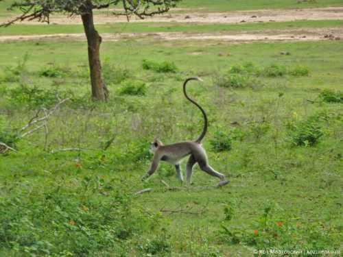 скунс, крокодил, обезьяна и другие экзотические домашние животные