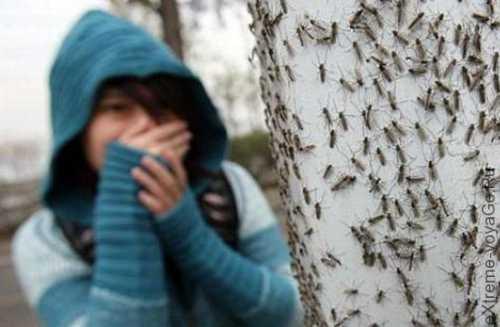 это япония, детка: комаров раскрыл секреты, как снимался новый сезон мира наизнанку